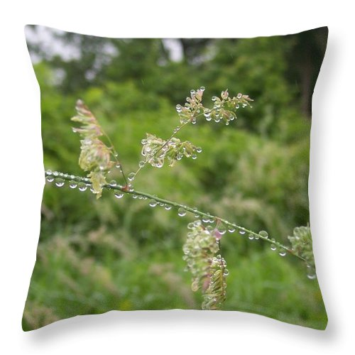 Raindrops Nature Grasses Green Water Throw Pillow featuring the photograph Rainspots I by Anna Villarreal Garbis