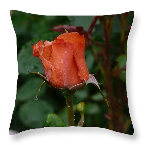 Flower Throw Pillow featuring the photograph Rainy Rose Bud by Valerie Ornstein