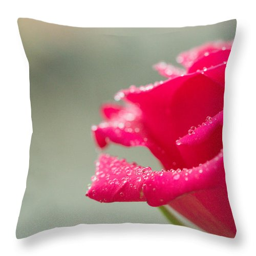 Rose Throw Pillow featuring the photograph Rainy Rose by Chris Lees