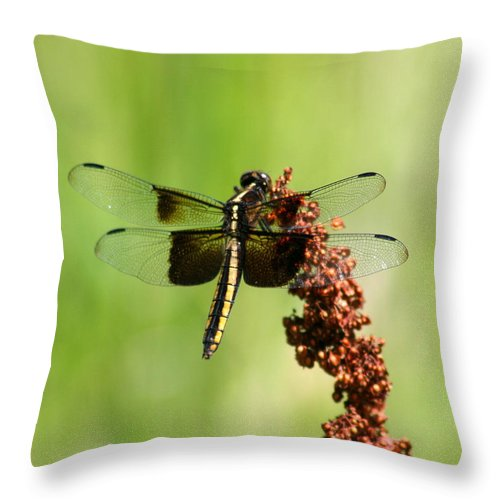 Bug Throw Pillow featuring the photograph Rally Stripe Dragonfly 7 by David Dunham