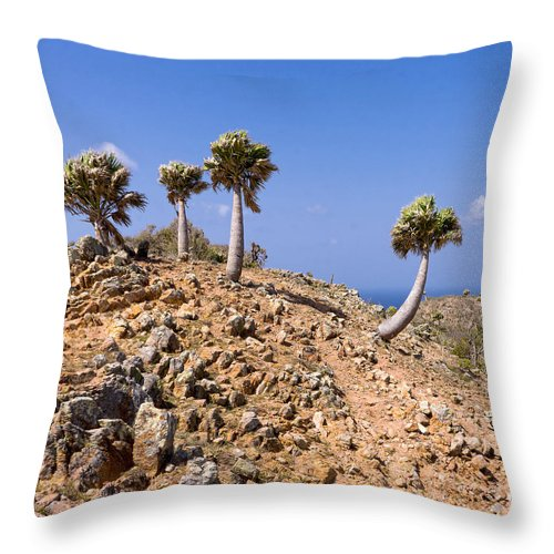 Curacao Throw Pillow featuring the photograph Rare Palm Tress Curacao by For Ninety One Days