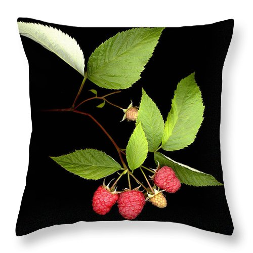 Red Raspberry Throw Pillow featuring the photograph Raspberry by Sandi F Hutchins