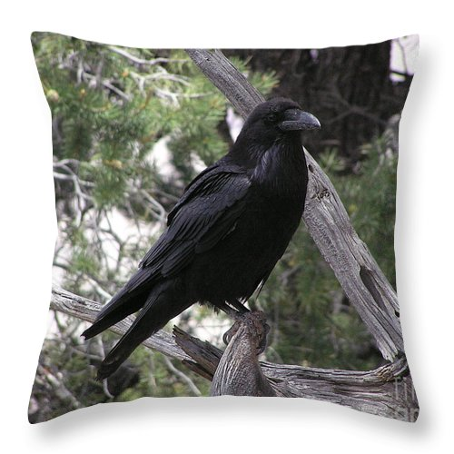 Raven Throw Pillow featuring the photograph Raven by Louise Magno