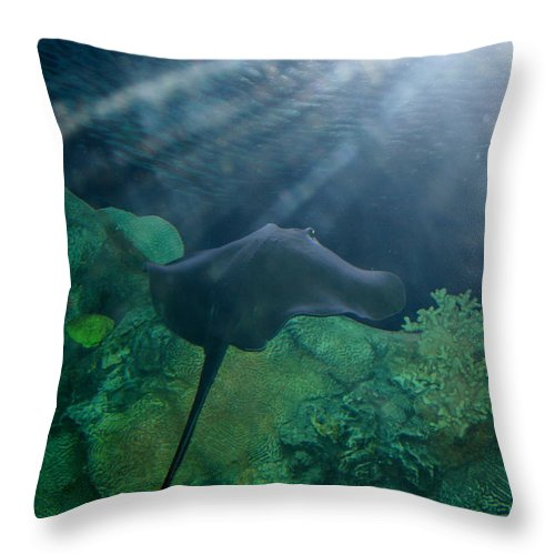 Stingray Throw Pillow featuring the photograph Ray To Rays by David Dunham