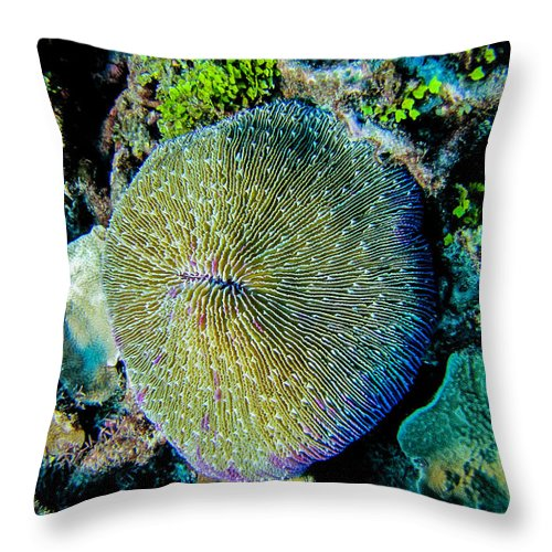 Coral Throw Pillow featuring the photograph Razor Coral At Pakin Atoll by Dan Norton
