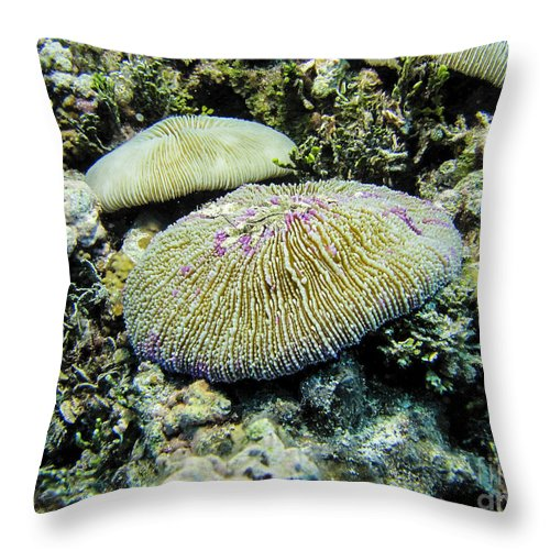 Coral Throw Pillow featuring the photograph Razor Coral In Kwajalein by Dan Norton