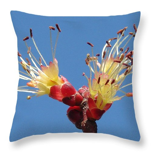 Throw Pillow featuring the photograph Re-awakening by Luciana Seymour