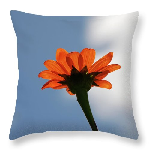 Orange Flower Throw Pillow featuring the photograph Reach For The Sky by Debbie Karnes
