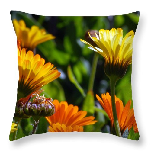 Flower Throw Pillow featuring the photograph Reach For The Sun 1 by Amy Fose