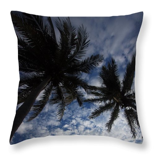 Palms Throw Pillow featuring the photograph Reaching For The Sky by Mary Haber