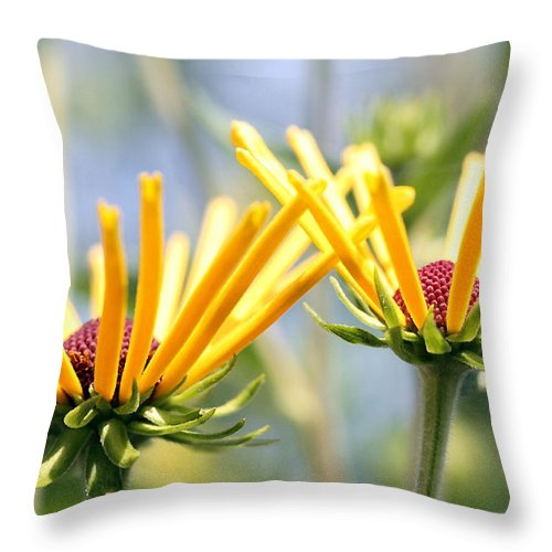 Landscape Throw Pillow featuring the photograph Reaching For The Sun by Mary Haber