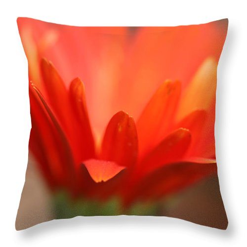 Daisy Plant Flower Orange Green Growing Photography Photograph Art Digital Throw Pillow featuring the photograph Reaching Out by Shari Jardina