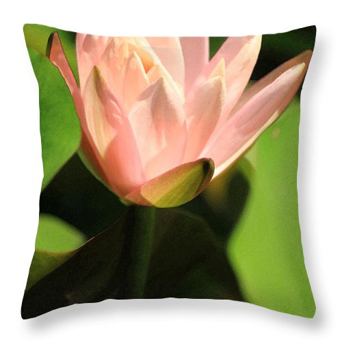 Pink Throw Pillow featuring the photograph Reaching Up by Suzanne Gaff