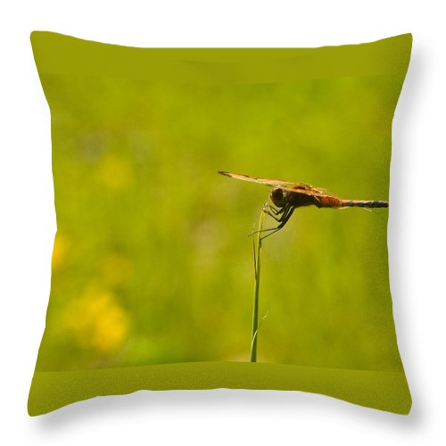 Dragonfly Throw Pillow featuring the photograph Ready For Flight by Douglas Barnett