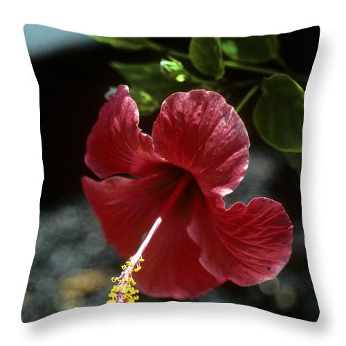 Orchid Throw Pillow featuring the photograph Ready For Picking by Gary Wonning