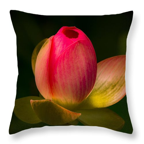 Jay Stockhaus Throw Pillow featuring the photograph Ready To Bloom by Jay Stockhaus
