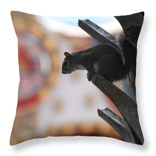 Squirrel Throw Pillow featuring the photograph Ready To Jump by Rob Hans