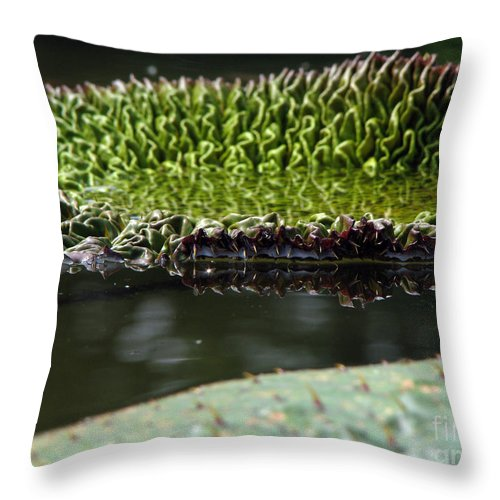 Lillypad Throw Pillow featuring the photograph Ready to spread by Amanda Barcon