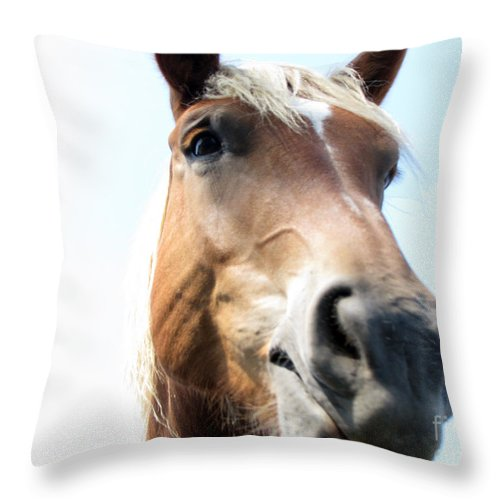 Horse Throw Pillow featuring the photograph Really by Amanda Barcon