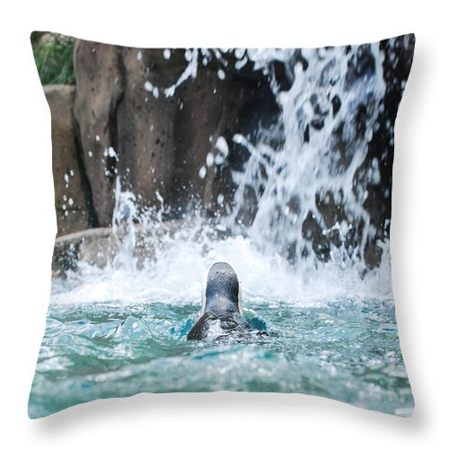 Penguin Throw Pillow featuring the photograph Rear View Penguin by Maggy Marsh