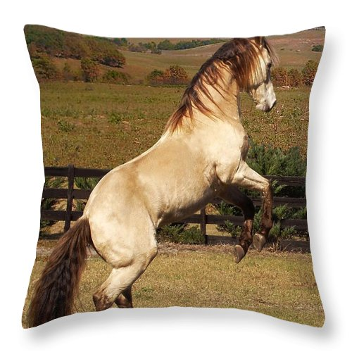 Horse Throw Pillow featuring the photograph Wild At Heart by Barbie Batson