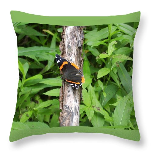 Red Admiral Butterfly Images Red Admiral Butterfly Photograph Prints American Butterflies Entomology Forest Ecosystem Forest Habitat Nature Biodiversity Butterfly Species Orange And Black Butterfly Images Pictures Throw Pillow featuring the photograph Red Admiral Butterfly by Joshua Bales