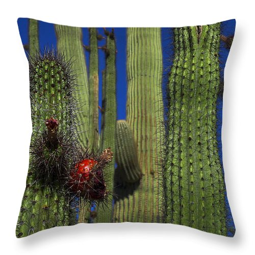 Red Alert Throw Pillow featuring the photograph Red Alert by Skip Hunt