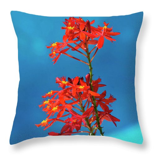 Orchid Throw Pillow featuring the photograph Red And Blue by Bibi Rojas