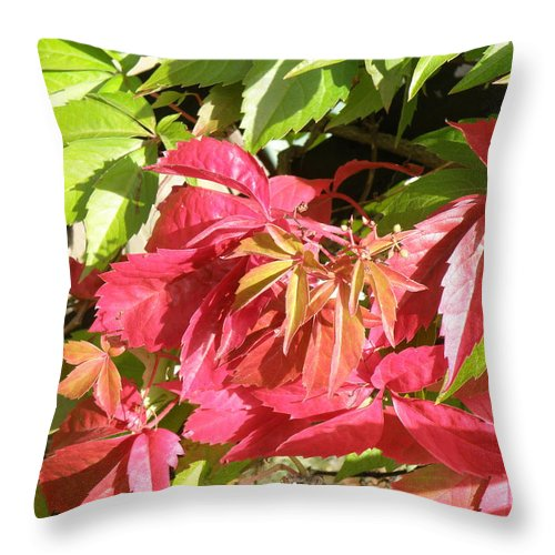 Leaves Throw Pillow featuring the photograph Red And Green by Ted Denyer