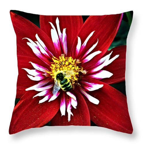 Flower Throw Pillow featuring the photograph Red And White Flower With Bee by Anthony Jones
