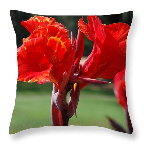 Asiatic Lily Throw Pillow featuring the photograph Red And Yellow Asiatic Lilies by Suzanne Gaff
