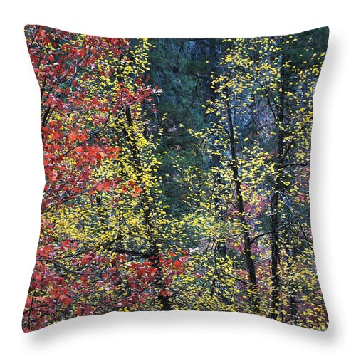 Landscape Throw Pillow featuring the photograph Red And Yellow Leaves Abstract Vertical Number 2 by Heather Kirk