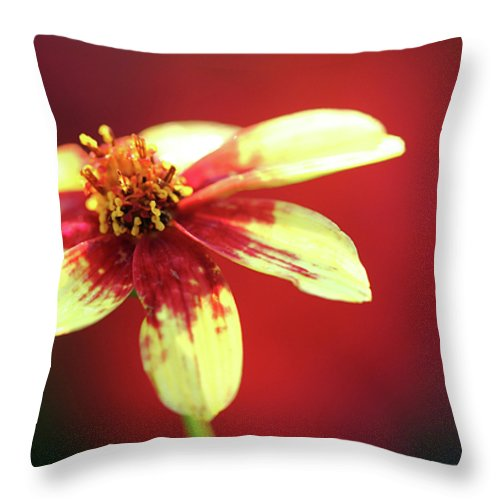 Florals Throw Pillow featuring the photograph Red And Yellow by Mary Haber
