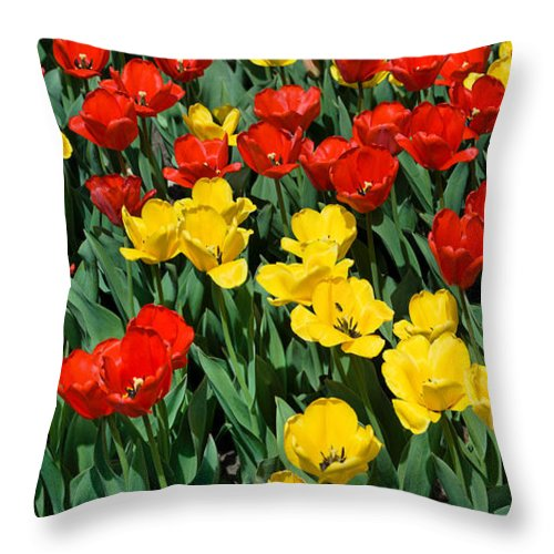 Red Throw Pillow featuring the photograph Red And Yellow Tulips Naperville Illinois by Michael Bessler