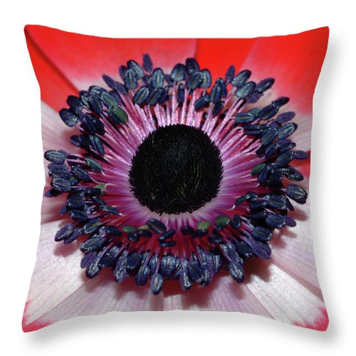 Red Anemone Throw Pillow featuring the photograph Red Anemone V1 by Robert Shard