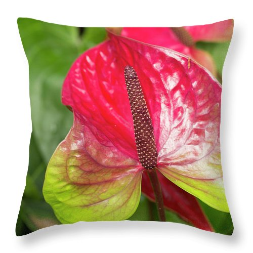 Anthurium Throw Pillow featuring the photograph Red Anthurium Flower by Mark Michel