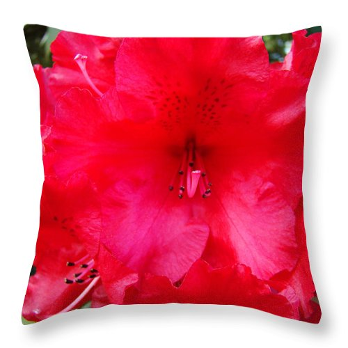 �azaleas Artwork� Throw Pillow featuring the photograph Red Azaleas Flowers 4 Red Azalea Garden Giclee Art Prints Baslee Troutman by Baslee Troutman