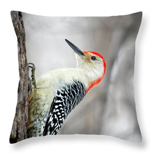 Birds Throw Pillow featuring the photograph Red-bellied Woodpecker by Al Mueller