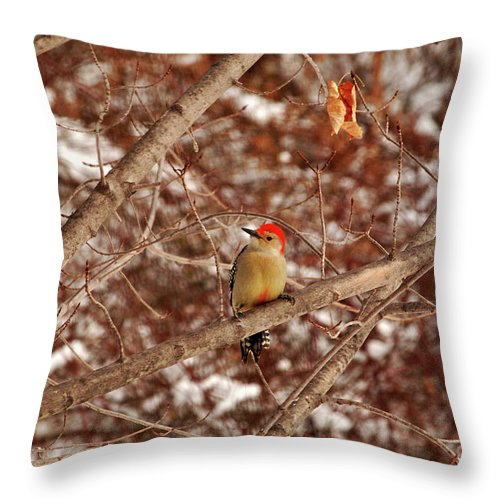 Woodpecker Throw Pillow featuring the photograph Red Belly by Lori Tambakis