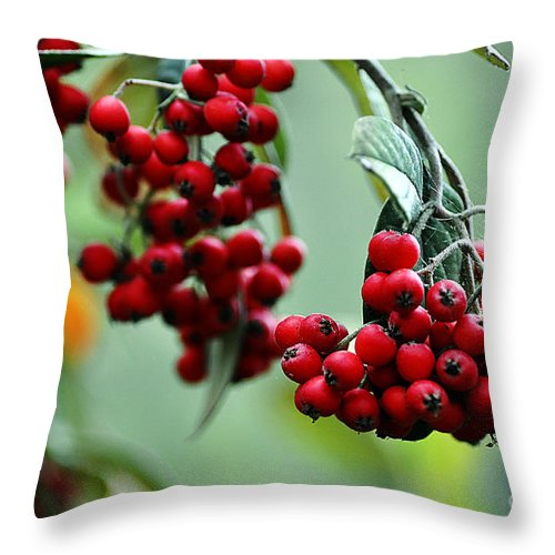 Clay Throw Pillow featuring the photograph Red Berries by Clayton Bruster
