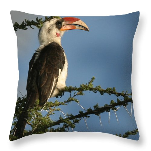 Hornbill Throw Pillow featuring the photograph Red Bill Hornbill by Joseph G Holland