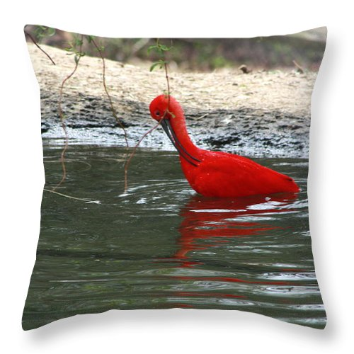 Sylvan Heights Bird Sanctuary 4 2015 Throw Pillow featuring the photograph Red Bird by Teresa Doran