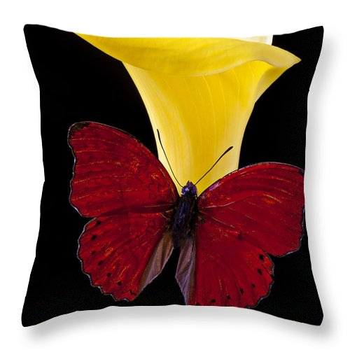 Red Butterfly Throw Pillow featuring the photograph Red Butterfly And Calla Lily by Garry Gay