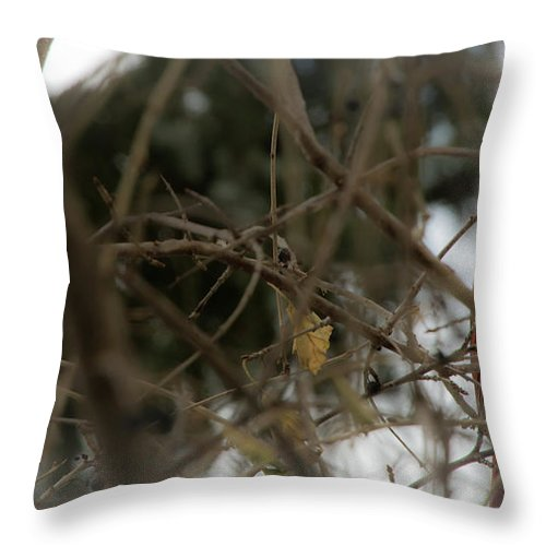 Male Throw Pillow featuring the photograph Red Cardinal II by Deborah Klubertanz