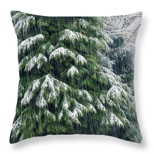 Astoria Throw Pillow featuring the photograph Red Cedar And Snow by Robert Potts