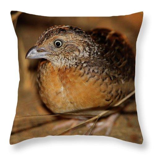 Red-chested Button-quail Throw Pillow featuring the photograph Red-chested Button-quail by Bruce J Robinson