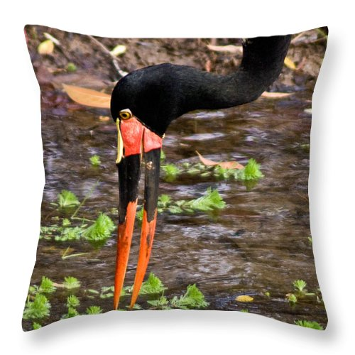 Red Throw Pillow featuring the photograph Red-crowned Crane by Douglas Barnett