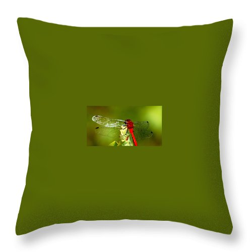 Digital Photograph Throw Pillow featuring the photograph Red Dragon 2 by David Lane