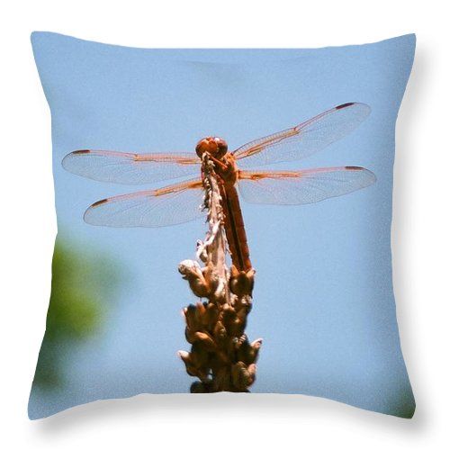 Dragonfly Throw Pillow featuring the photograph Red Dragonfly by Dean Triolo