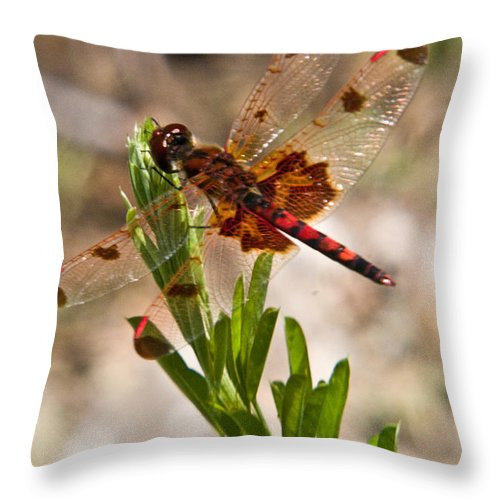 Dragonfly Throw Pillow featuring the photograph Red Dragonfly by Douglas Barnett